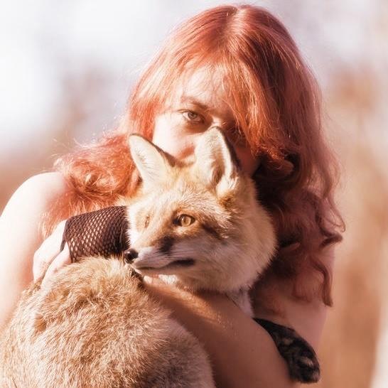 golden_fox