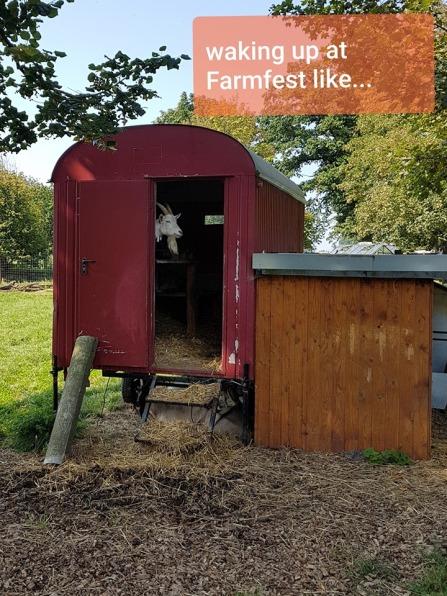 farmfest_ziege